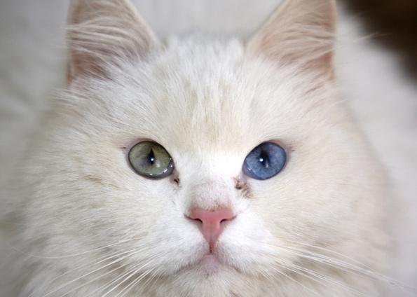بالصور اجمل الصور للقطط في العالم , احلي صور قطط 6581 1