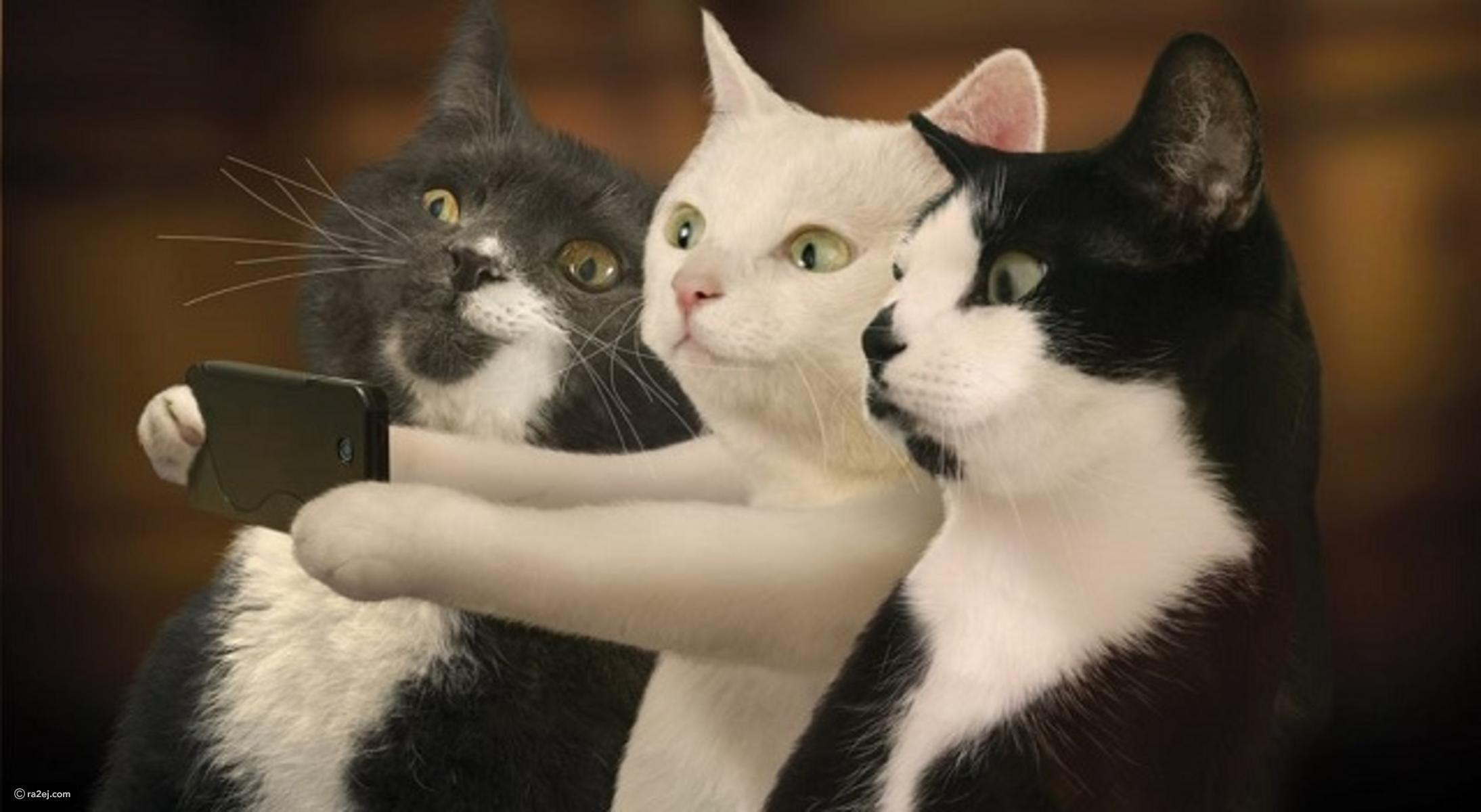 بالصور اجمل الصور للقطط في العالم , احلي صور قطط 6581 10