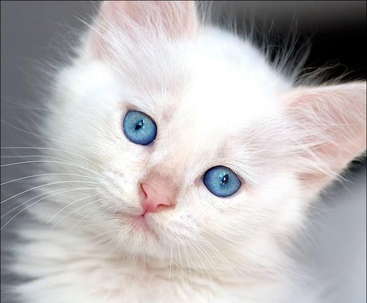 بالصور اجمل الصور للقطط في العالم , احلي صور قطط 6581 3