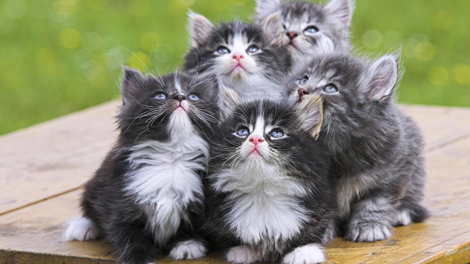 بالصور اجمل الصور للقطط في العالم , احلي صور قطط 6581 4