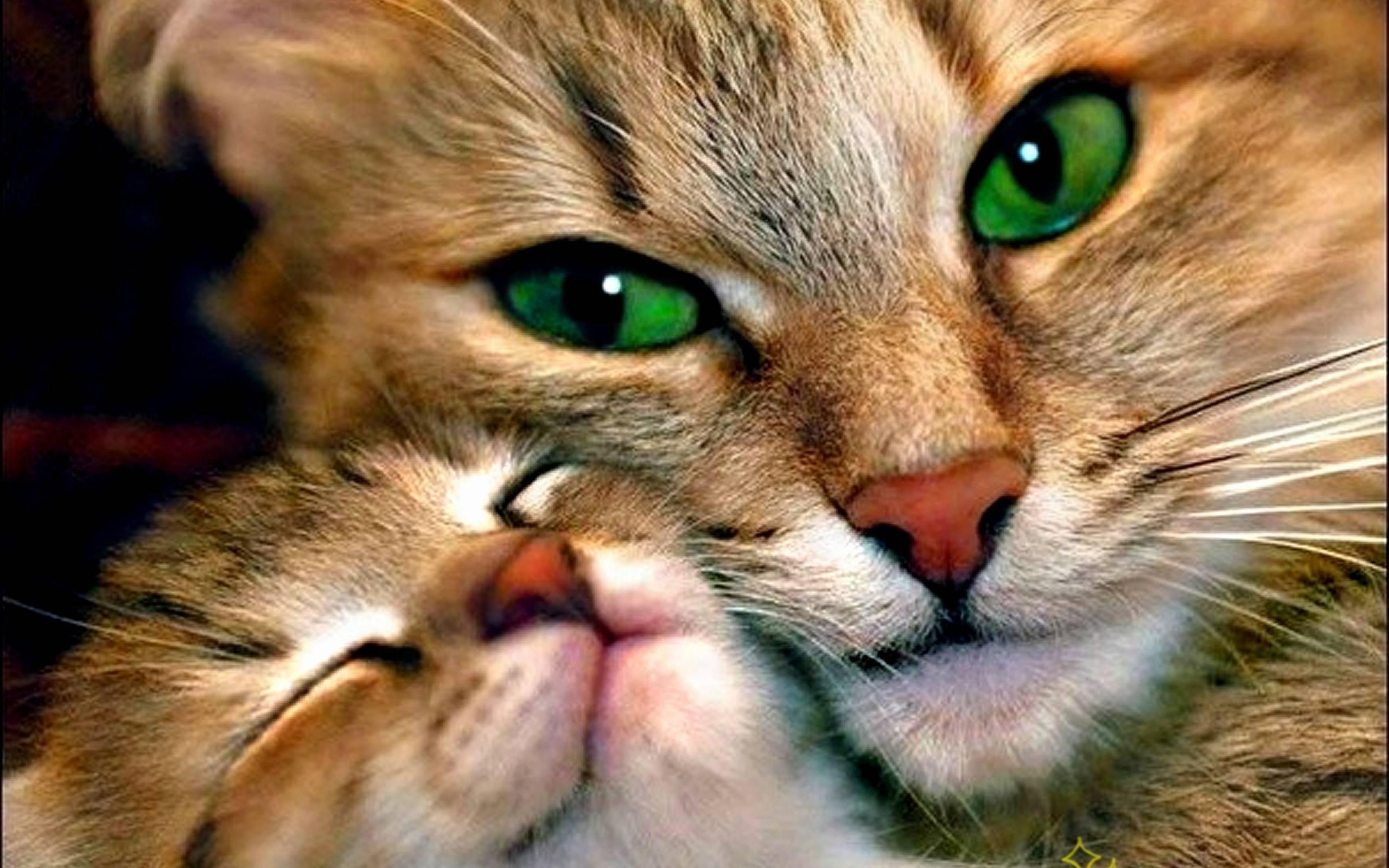 بالصور اجمل الصور للقطط في العالم , احلي صور قطط 6581 5