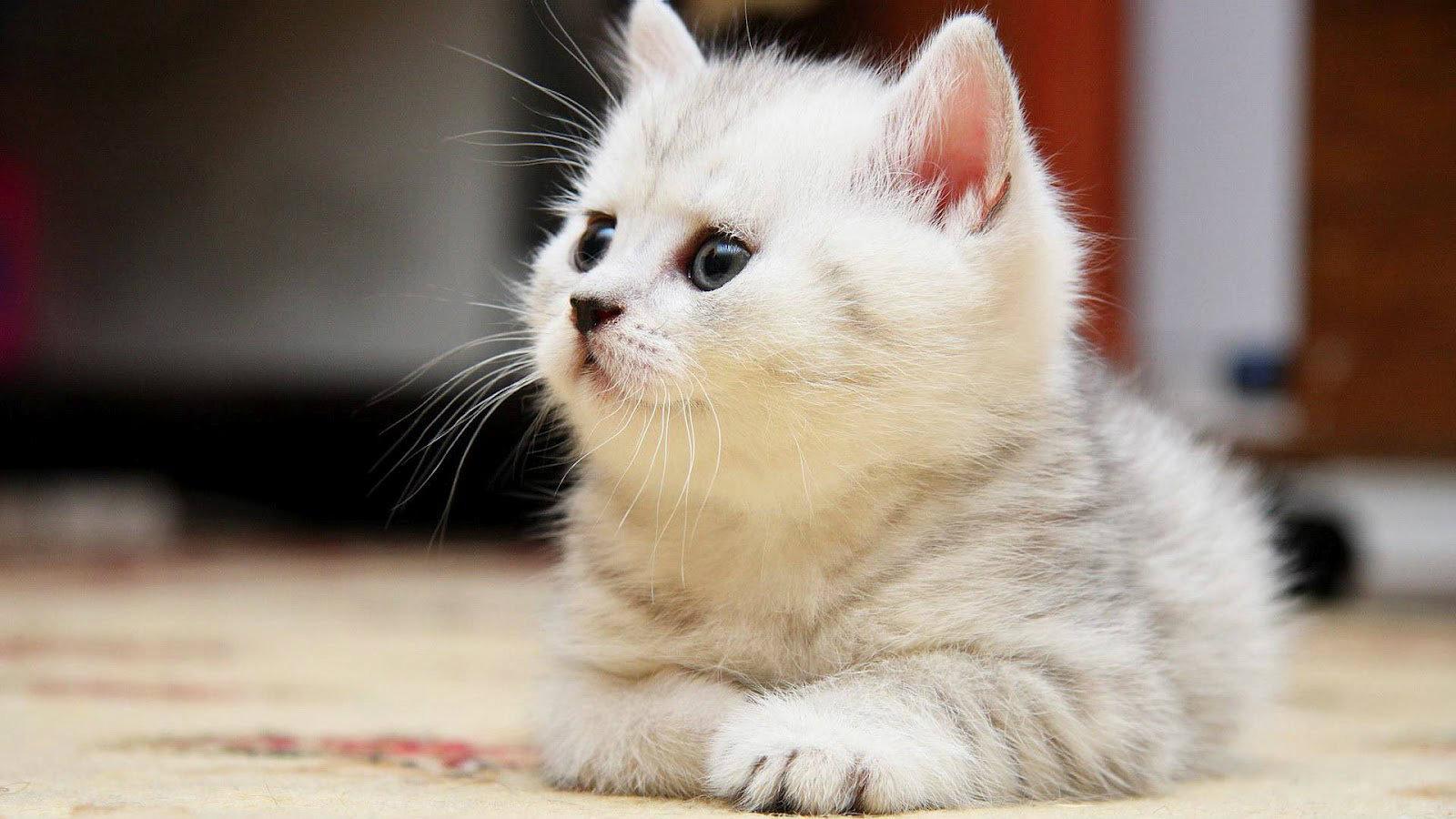 بالصور اجمل الصور للقطط في العالم , احلي صور قطط 6581 6