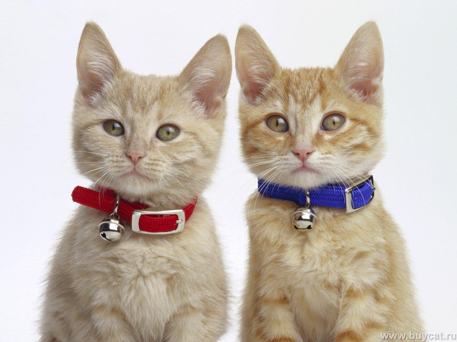 بالصور اجمل الصور للقطط في العالم , احلي صور قطط 6581 7