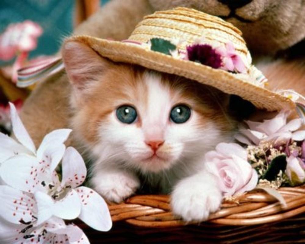 بالصور اجمل الصور للقطط في العالم , احلي صور قطط 6581 8
