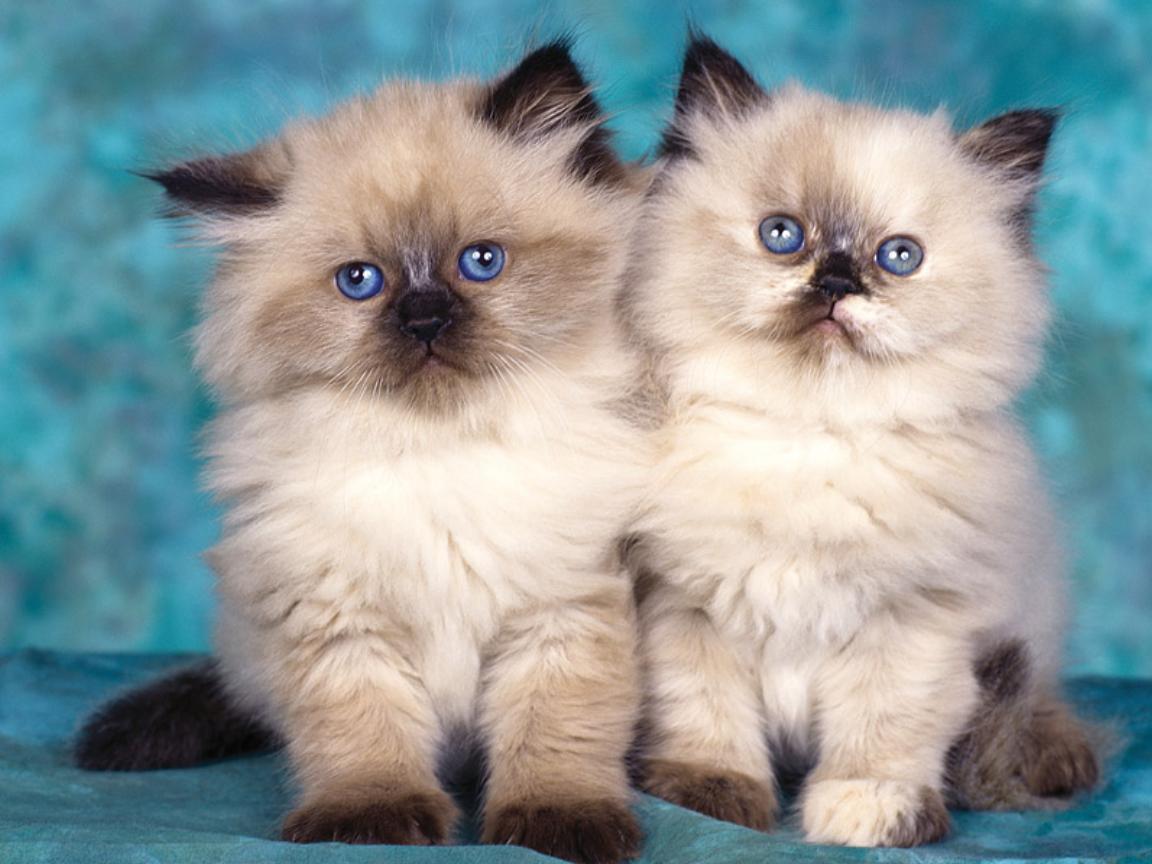 بالصور اجمل الصور للقطط في العالم , احلي صور قطط 6581 9