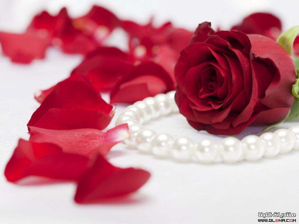 صور ورد صور ورد احلي صور الورد الجميل حبيبي