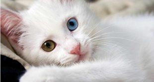 صورة اجمل الصور للقطط في العالم , احلي صور قطط