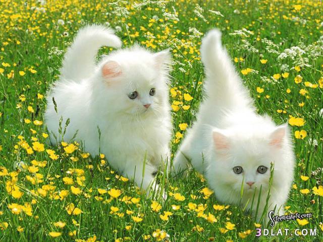 بالصور خلفيات قطط , صور خلفيات للقطط 2705 10