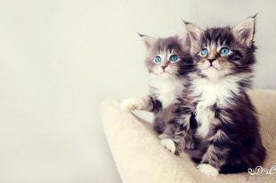 صور خلفيات قطط , صور خلفيات للقطط
