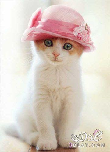 بالصور خلفيات قطط , صور خلفيات للقطط 2705 2