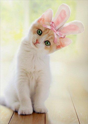 بالصور خلفيات قطط , صور خلفيات للقطط 2705 3