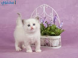 بالصور خلفيات قطط , صور خلفيات للقطط 2705 5