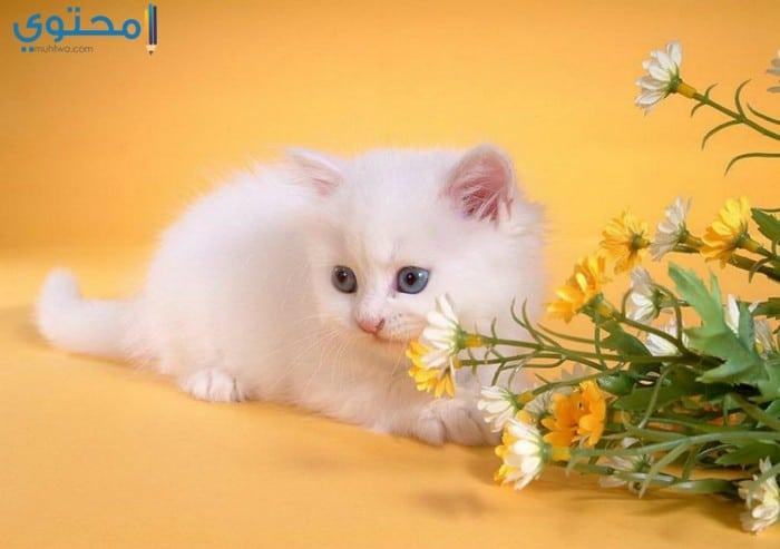 بالصور خلفيات قطط , صور خلفيات للقطط 2705 9