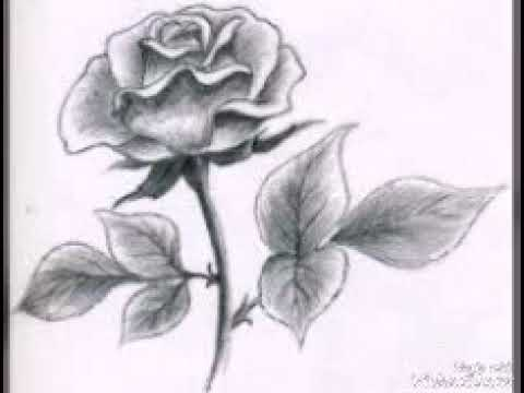 بالصور رسومات جميله , صور رسومات جميلة 3229