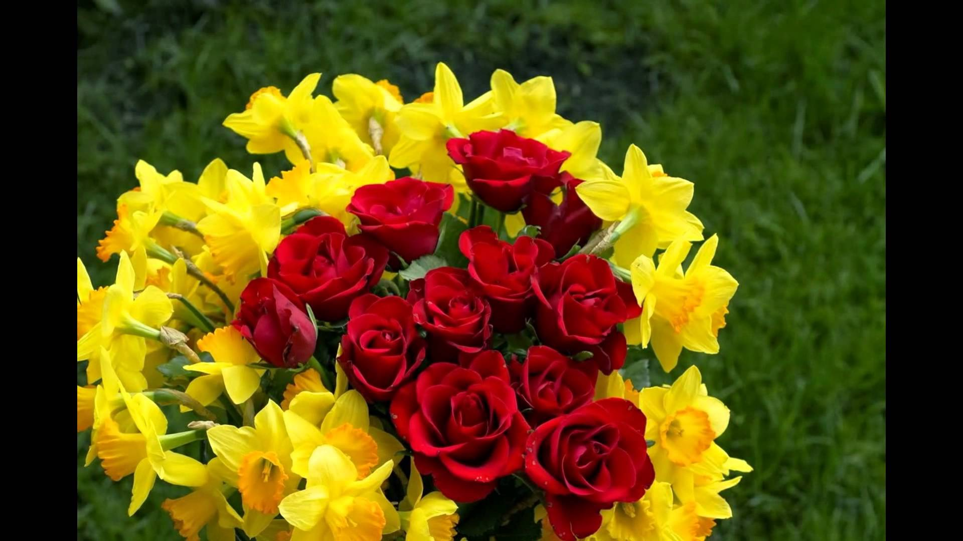 بالصور احلى صور ورد , صور اجمل الورود 3232 6