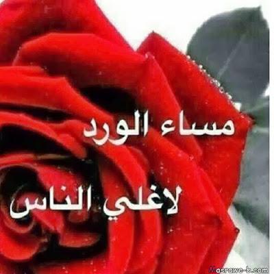 بالصور احلى صور ورد , صور اجمل الورود 3232 8