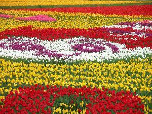 صوره احلى صور ورد , صور اجمل الورود