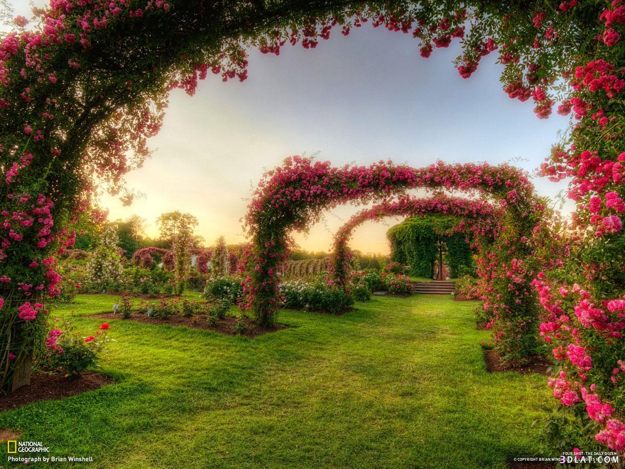 بالصور صور خلفيات جميله , اجمل الخلفيات الرائعه 3266 2