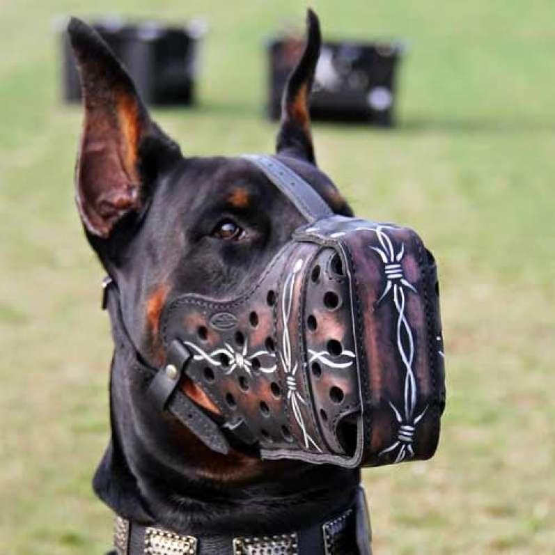 بالصور اشرس انواع الكلاب , بالصور اقوى انواع الكلاب الشرسة 3293 5