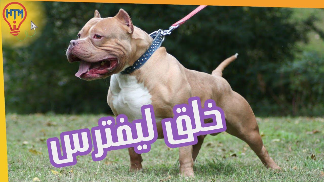 صورة اشرس انواع الكلاب , بالصور اقوى انواع الكلاب الشرسة