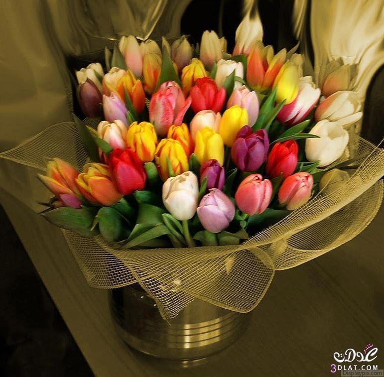 بالصور باقات ورود , اجمل الصور لباقات الورود 3305 2