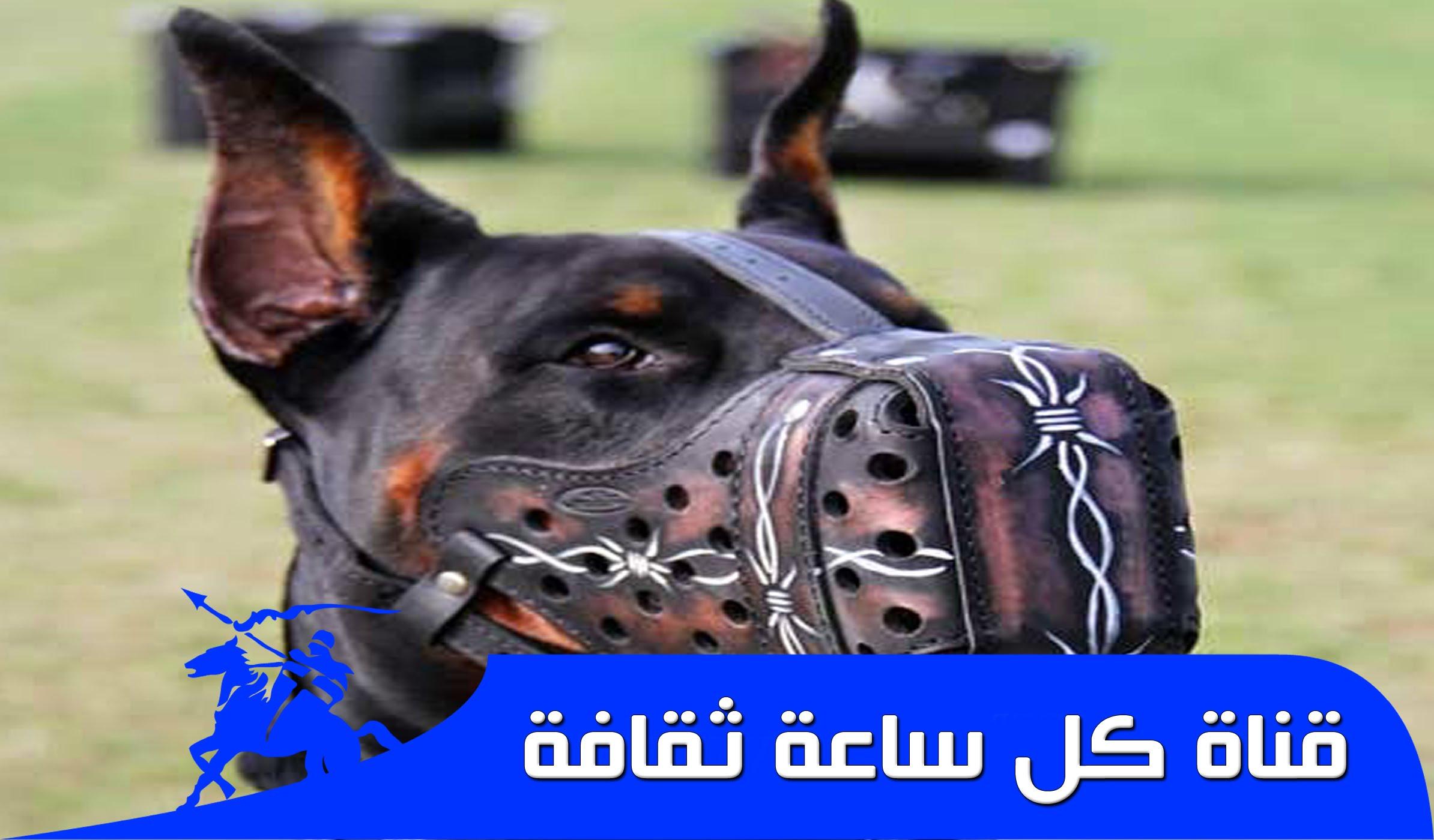 صورة اخطر انواع الكلاب , صور اخطر انواع الكلاب