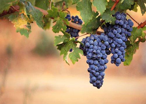 بالصور فوائد العنب الاحمر , ماهى الفوائد للعنب الاحمر 3374 1