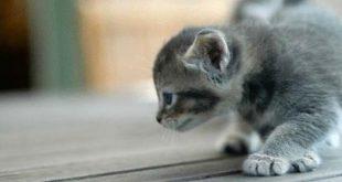 صورة كيفية تربية القطط , الطريقة الصحيحه لتربيه القطط