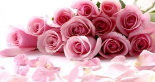 صور ورد جميل , اجمل الصور الورود
