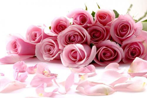 صورة صور ورد جميل , اجمل الصور الورود