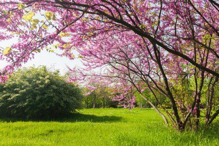 صورة شعر عن الربيع , مناظر جميلة لفصل الربيع