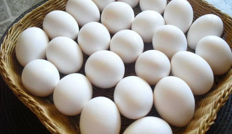 صورة تفسير رؤية البيض في المنام للمتزوجة , البيض في الحلم