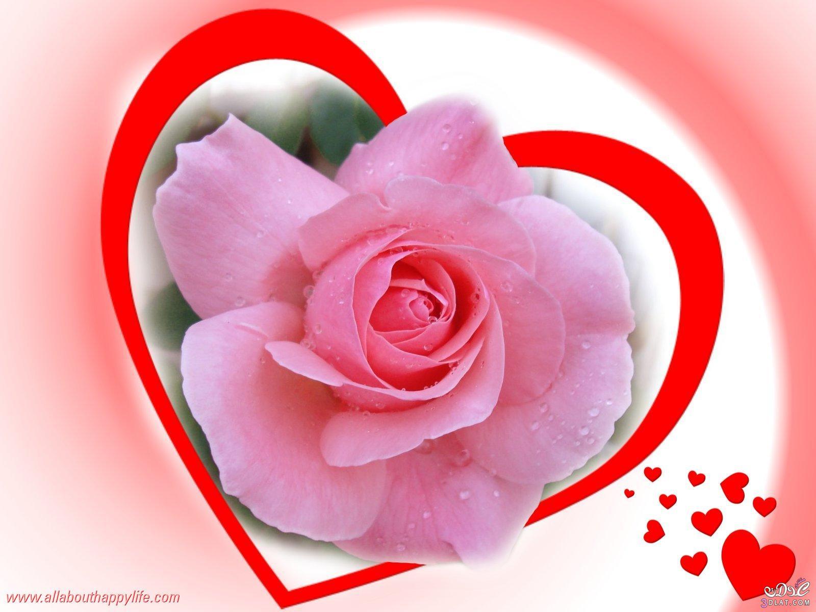 صوره اجمل ورود الحب , احلى الازهار المعبرة عن الرومنسيه والحب