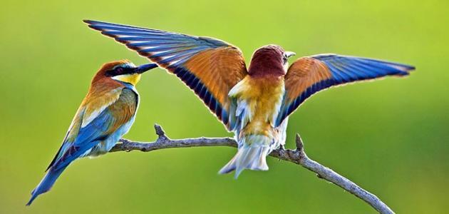 بالصور اجمل طيور العالم , اروع الطيور الزينه فى العالم 1075 1