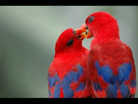بالصور اجمل طيور العالم , اروع الطيور الزينه فى العالم 1075 10