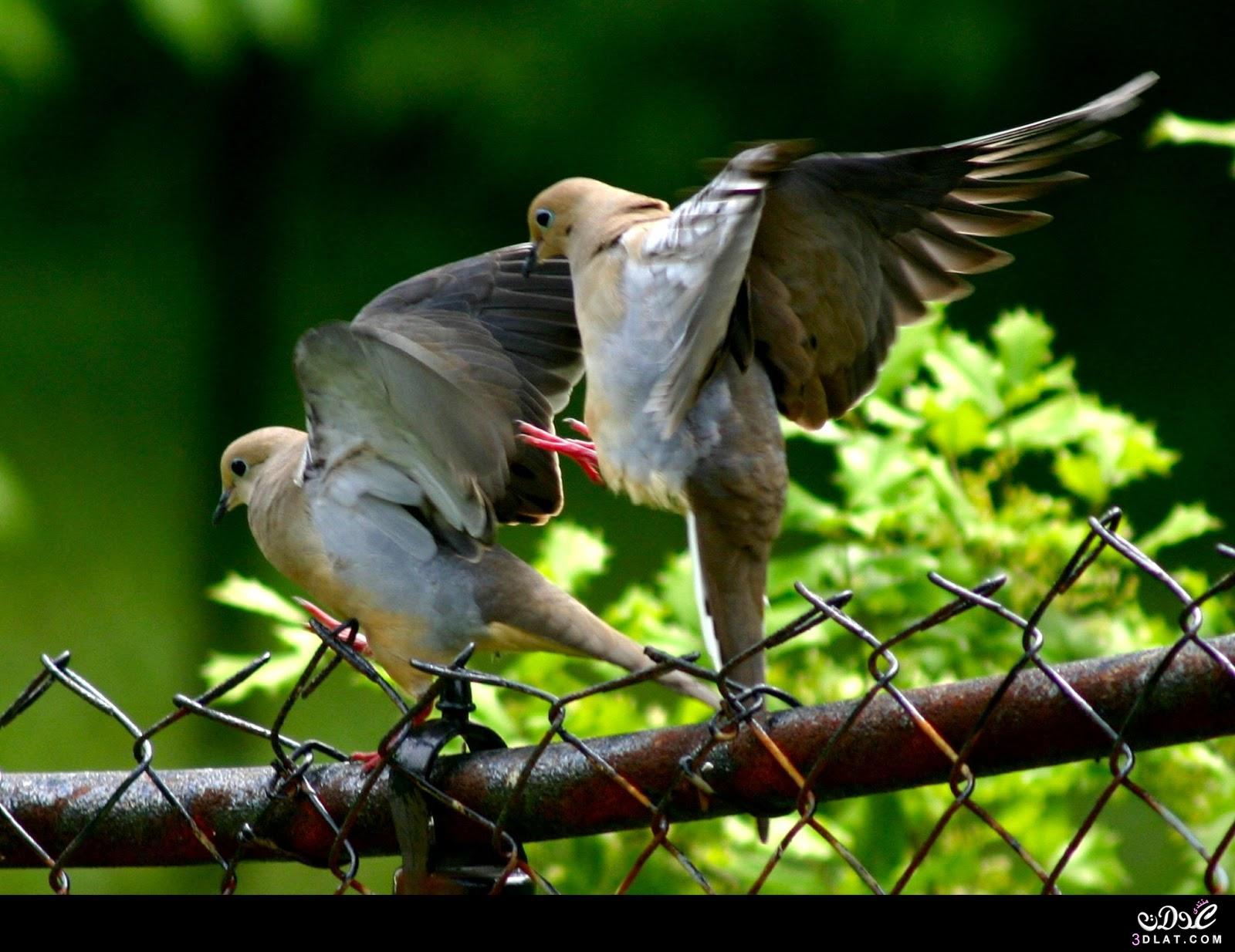 بالصور اجمل طيور العالم , اروع الطيور الزينه فى العالم 1075 11