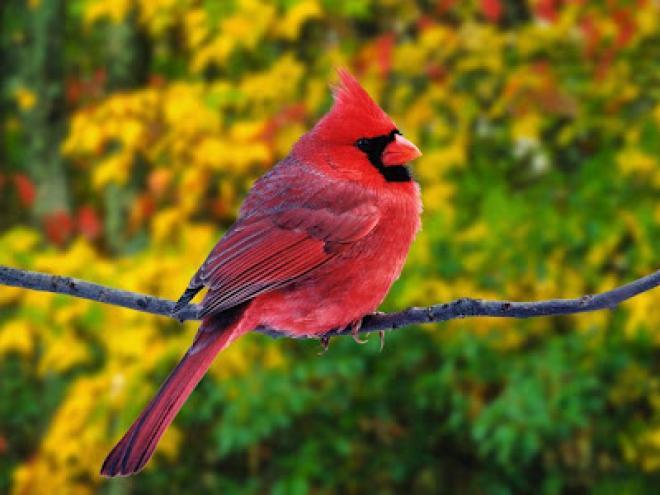 بالصور اجمل طيور العالم , اروع الطيور الزينه فى العالم 1075 2