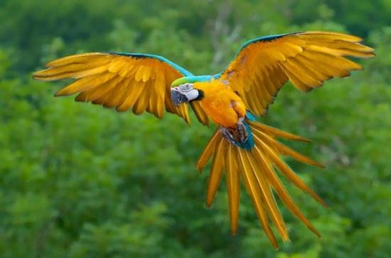 بالصور اجمل طيور العالم , اروع الطيور الزينه فى العالم 1075 6