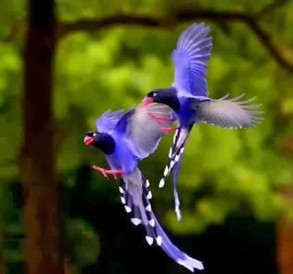 بالصور اجمل طيور العالم , اروع الطيور الزينه فى العالم 1075 8