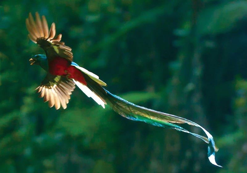 بالصور اجمل طيور العالم , اروع الطيور الزينه فى العالم 1075 9