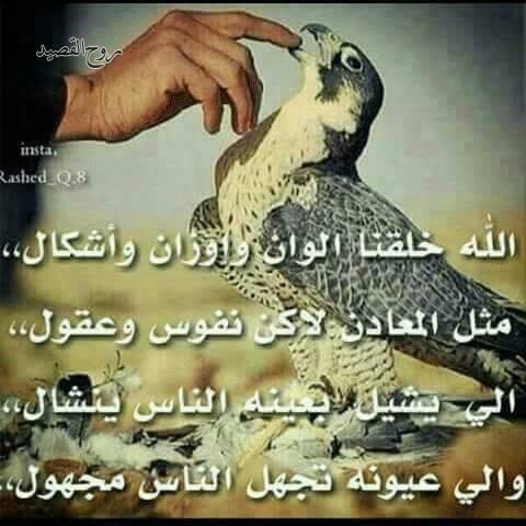 بالصور ابيات شعر قصيره حكم , شعر قصير حكم ومواعظ 1247 6
