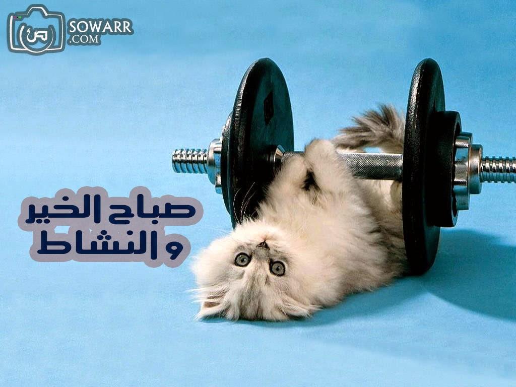 صورة صباح الخير مضحكة , اجمل صورة كومديه مكتوب عليها صباح الخير 2276 9