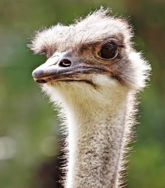 بالصور اكبر طائر في العالم , صور ومعلومات عن اكبر طائر في العالم 2331 4