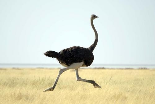 بالصور اكبر طائر في العالم , صور ومعلومات عن اكبر طائر في العالم 2331 6