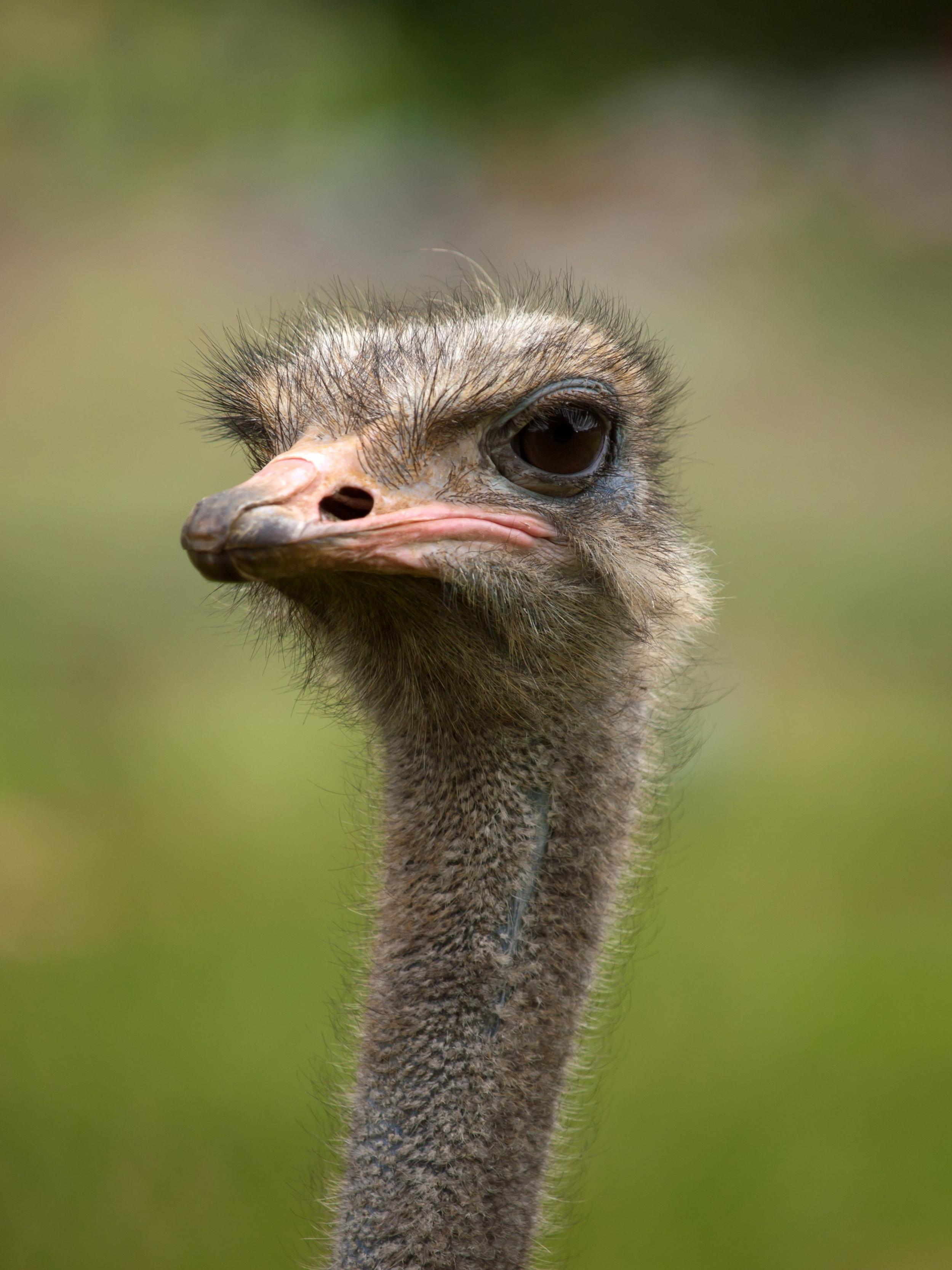 بالصور اكبر طائر في العالم , صور ومعلومات عن اكبر طائر في العالم 2331 9