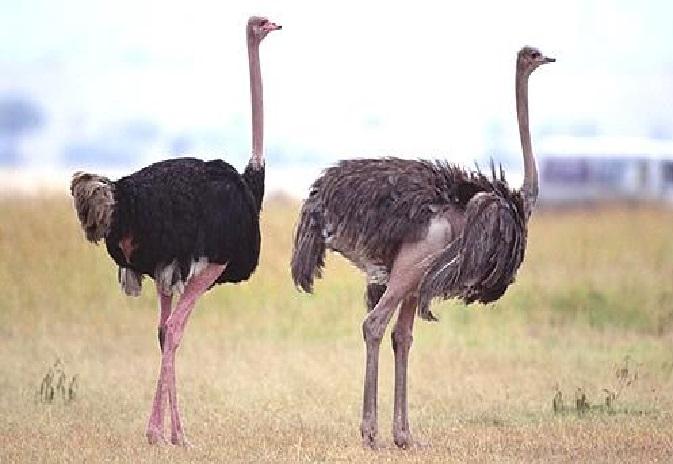 بالصور اكبر طائر في العالم , صور ومعلومات عن اكبر طائر في العالم 2331