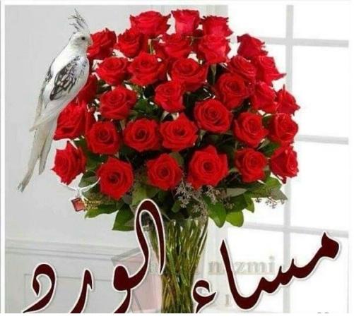 بالصور صور مساء الورد , اجمل صورة مكتوب عليها كلمات مسائية 2598 9