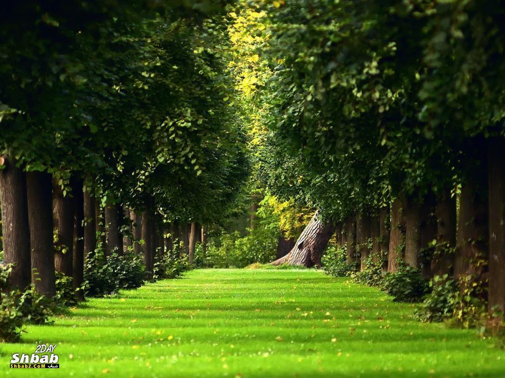 بالصور خلفيات الطبيعة , اجمل صور المناظر طبيعيه وخلابة 2665 11