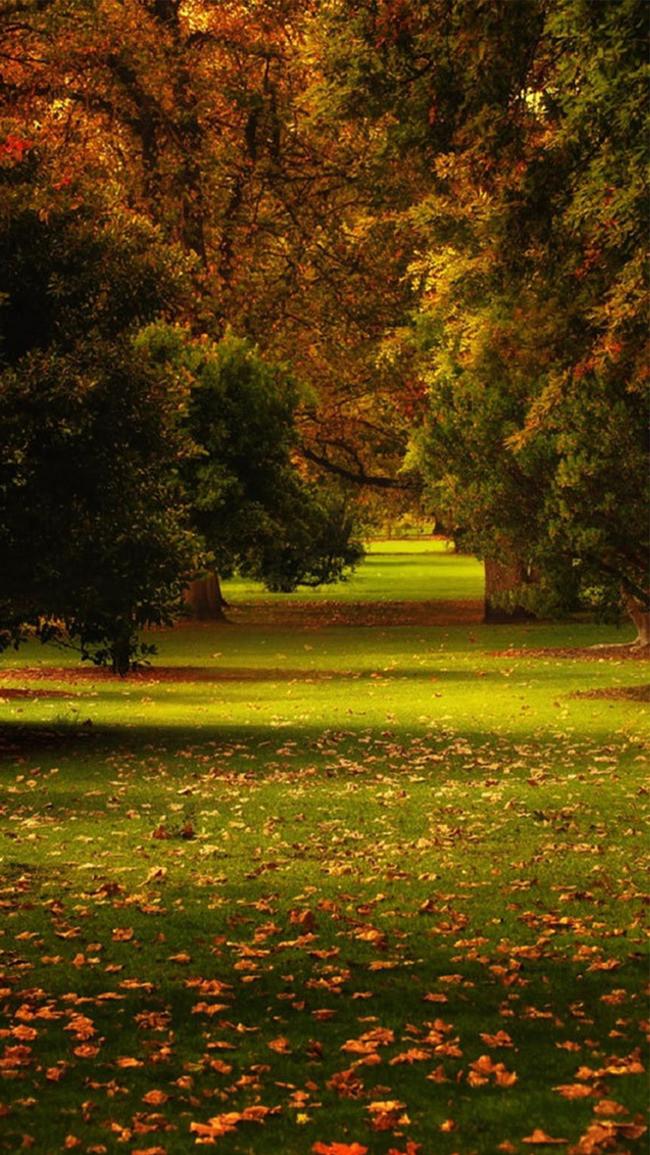 بالصور خلفيات الطبيعة , اجمل صور المناظر طبيعيه وخلابة 2665 6