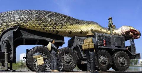 بالصور اكبر ثعبان في العالم , معلومات عن اكبر ثعابين فى العالم 2776 1